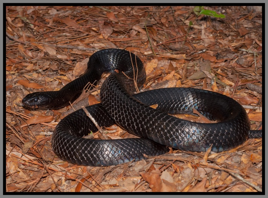 20 types of snakes you'll find in florida.